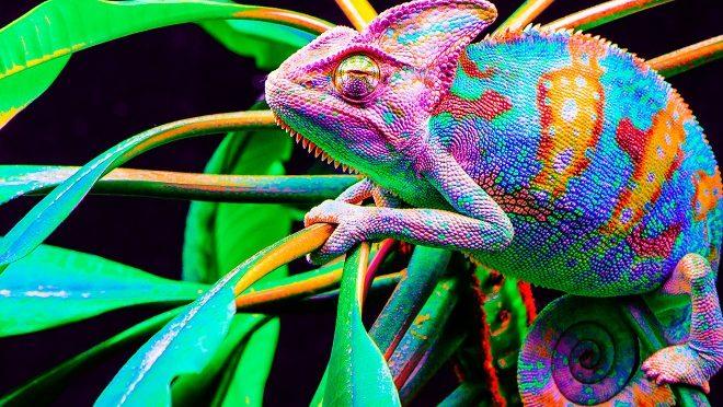 Creativity Chameleon